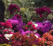 Flores tropicales Foto de archivo libre de regalías