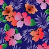 Flores tropicales del hibisco stock de ilustración
