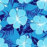 Flores tropicales del hibisco Foto de archivo libre de regalías