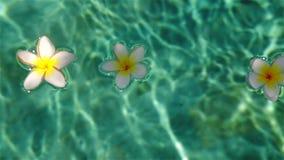 Flores tropicales en el agua metrajes