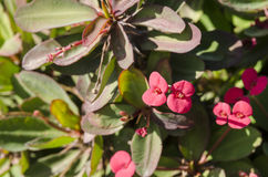 Flores tropicales exóticas Imagen de archivo