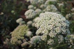 Flores tropicales muy hermosas blanco coloreado foto de archivo libre de regalías