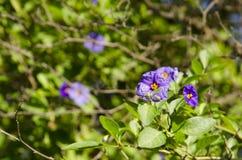 Flores tropicales púrpuras Imagenes de archivo