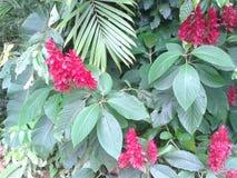 Flores tropicales rojas foto de archivo libre de regalías