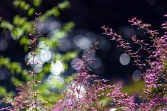 Flores tropicales rosadas Imagen de archivo libre de regalías