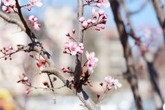 Flores tropicas cor-de-rosa bonitas Imagem de Stock
