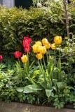 Flores urbanas holandesas Fotografía de archivo