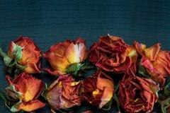 Flores & vaso Fotos de Stock Royalty Free