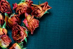 Flores & vaso Foto de Stock Royalty Free