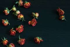 Flores & vaso Imagens de Stock