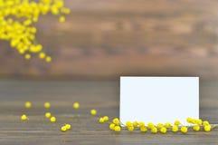 Flores vazias do cartão e da mimosa Imagem de Stock Royalty Free