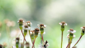 Flores velhas Imagem de Stock