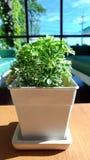 Flores verdes Fotos de Stock Royalty Free