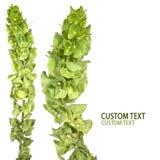 Flores verdes Imagen de archivo libre de regalías