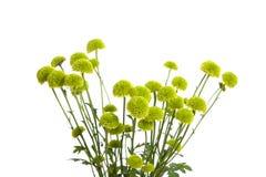 Flores verdes aisladas en blanco Fotos de archivo libres de regalías