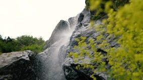 Flores verdes claras, pequeño arroyo y piedras grandes en las montañas georgianas en el slo-MES almacen de video