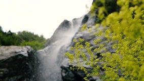 Flores verdes claras y piedras grandes en las montañas georgianas en verano en el slo-MES almacen de video
