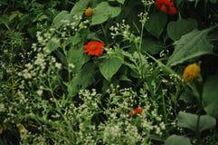 Flores verdes e amarelas imagens de stock royalty free