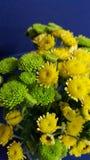 Flores verdes e amarelas Fotografia de Stock