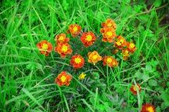 Flores verdes e amarelas com suporte da folha Fotos de Stock