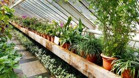 Flores verdes em Sofia Botanical Garden, Bulgária foto de stock
