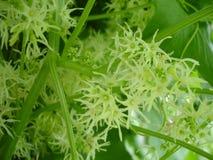 Flores verdes en un jardín de la primavera Imagenes de archivo