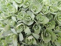 Flores verdes en un jardín de la primavera Fotos de archivo libres de regalías