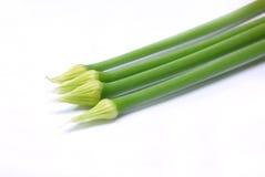 Flores verdes frescas de la cebolla del resorte del allium Imagen de archivo