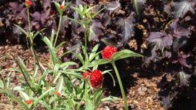 Flores vermelhas vídeos de arquivo