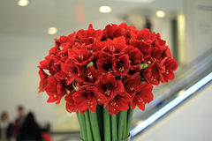 Flores vermelhas Imagem de Stock Royalty Free