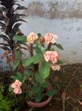 Flores vermelhas claras foto de stock royalty free