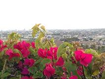 Flores vermelhas com as folhas verdes na borda de um monte Fotos de Stock Royalty Free