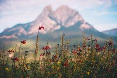 Flores vermelhas com a montagem borrada de Pedraforca no fundo foto de stock
