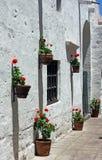 Flores vermelhas contra uma parede branca imagem de stock royalty free
