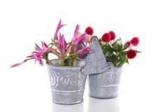 Flores vermelhas cor-de-rosa Foto de Stock