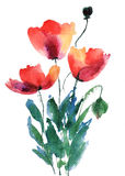 Flores vermelhas da papoila Foto de Stock Royalty Free