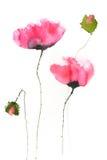 Flores vermelhas da papoila, ilustrador da aquarela Foto de Stock