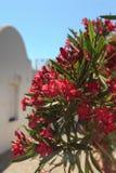 Flores vermelhas das casas brancas Fotografia de Stock Royalty Free