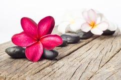 Flores vermelhas do Frangipani Fotografia de Stock Royalty Free