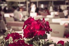 Flores vermelhas do gardenium em um restaurante da rua Fotos de Stock