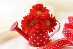 Flores vermelhas do gerber Fotos de Stock Royalty Free