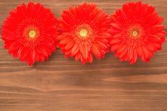 Flores vermelhas do Gerbera Fotografia de Stock