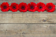 Flores vermelhas do gerbera Fotos de Stock