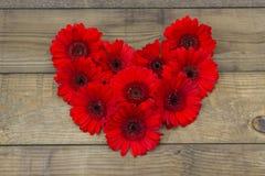 Flores vermelhas do gerbera Fotografia de Stock Royalty Free