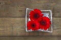 Flores vermelhas do gerbera Imagens de Stock