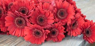 Flores vermelhas do gerbera Imagem de Stock