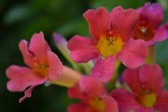 Flores vermelhas e amarelas fotos de stock royalty free