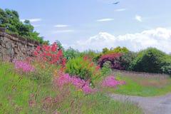 Flores vermelhas e cor-de-rosa fotos de stock