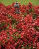 Flores vermelhas e lâmpada antiga Fotografia de Stock