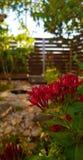 Flores vermelhas e opinião do jardim fotografia de stock royalty free